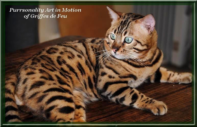Purrsonality art in motion chat de race toutes races en - Couper les griffes d un chaton de 2 mois ...