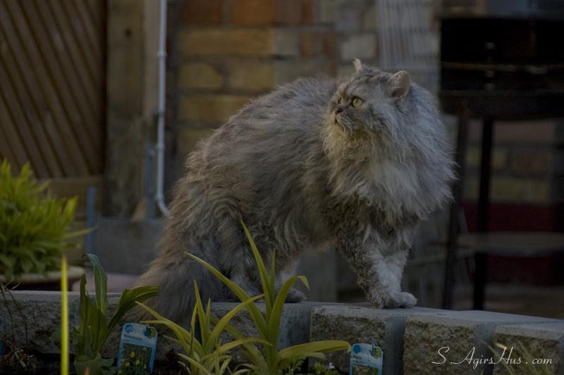 la villa chat Sur , le // à  rejoignez-nous pour un chat devant la télé n'attendez plus, inscrivez-vous pour chatter en direct  séries tv, émissions et films.
