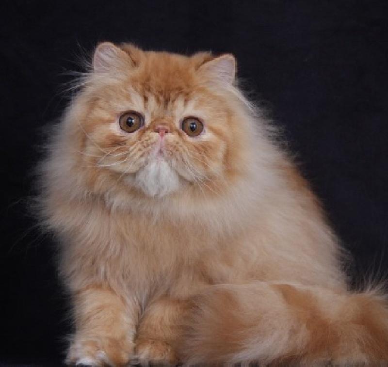 Site pour chat en ligne gratuit au maroc