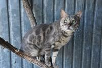 Wild Lynx Neiko