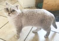 Meringue de cat's craddle