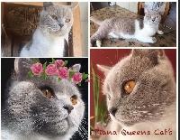 Queens Cats Piana