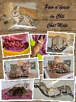 Pain d'épices Du Chti Chat Malo