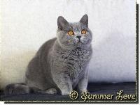 Osiris super queen Of Summer Love