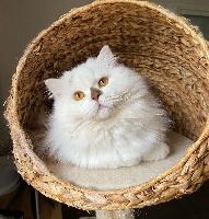 Winter feline christi*cz