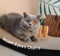 Velvet Eye's Obelix