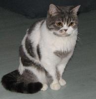 Venezia gem cat