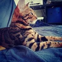 N'roll Cat's Cradle