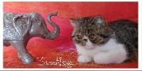 The Sweet Love Nice tigress