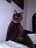 Fanny falone les chats d'amours