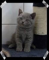 Harybo Du Paradina's Cats