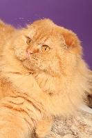 CH. Sweet Burgandy's Firefox