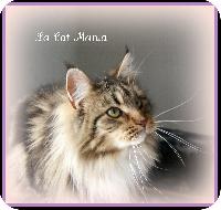 Gladys de la Cat Mania