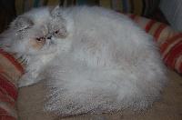 Selene anice cats