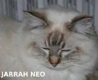 jarrah Néo