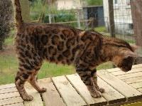 leocat's Iako