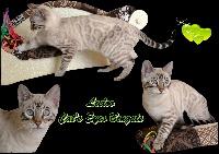 Leeloo cat's eyes bengals