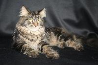 Jinie De Kermacats