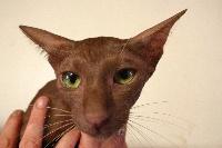 Cats4me Litchi coco
