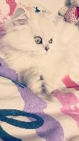 Jinie Lover's Kitten