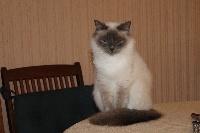 Easy-cat des félins albatine