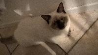 Mojito de cat's craddle