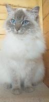 Nymphea Meow Meow