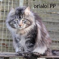 black draco's Orlaloi pp