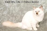 CH. Eur. Guess Who I Am du château Mermoz