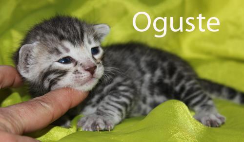 Oguste, male black silver à rosettes
