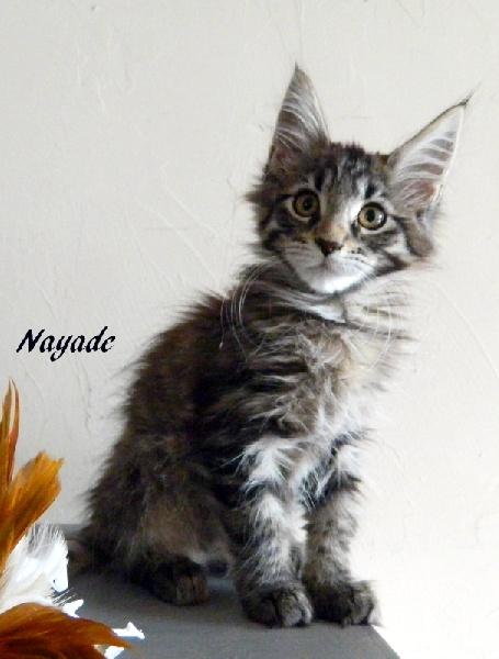 NAYADE D'AIGREFEUILLE