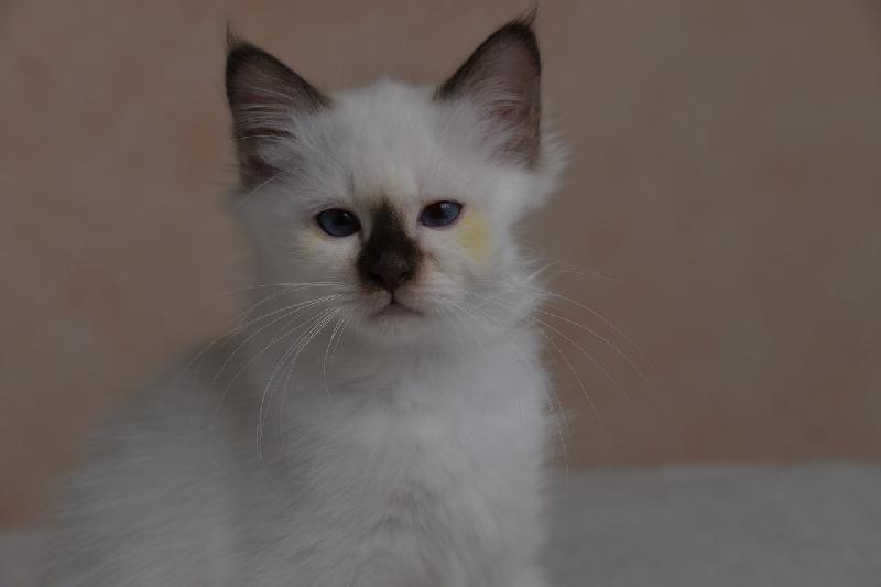 Nandou-Cat