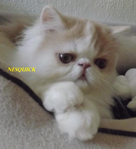 Nesquick -