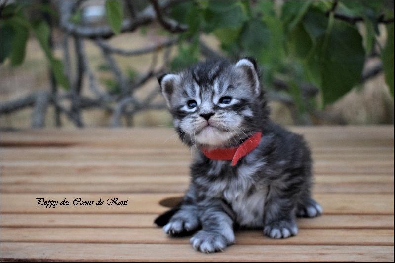 Acheter / vendre des chatons en France