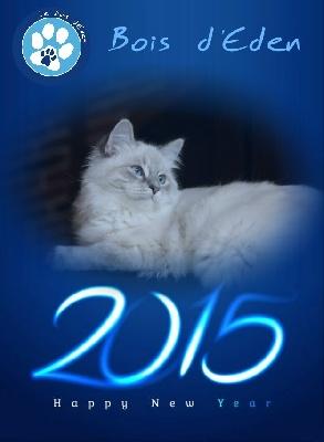 Du Bois D'Eden - Bonne année 2015 !!!