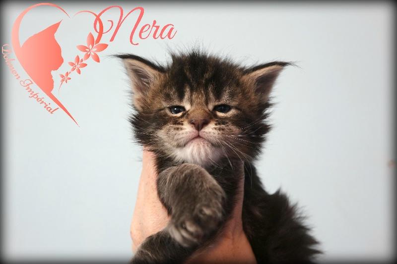 NERA -