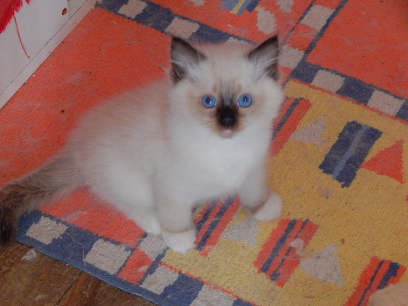 Osiris des Chalomcats -