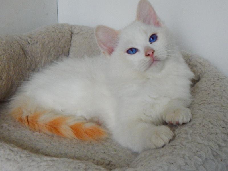 Nuage des Chalomcats