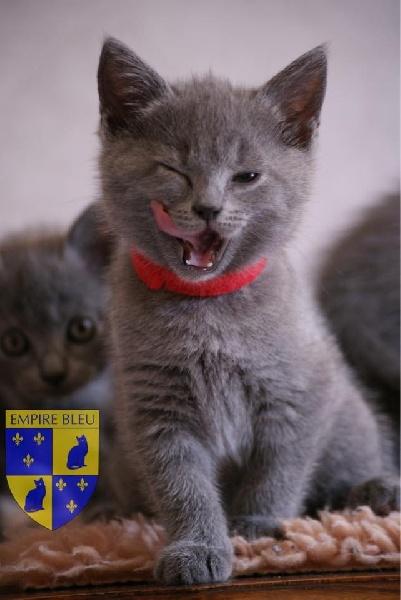 France 5 magazine de la sante chat