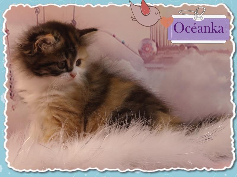 OCEANKA -