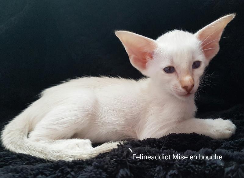 Felineaddict Mise en bouche -