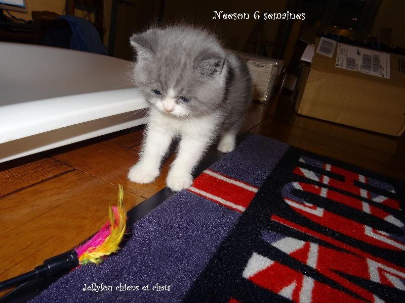 Neeson -