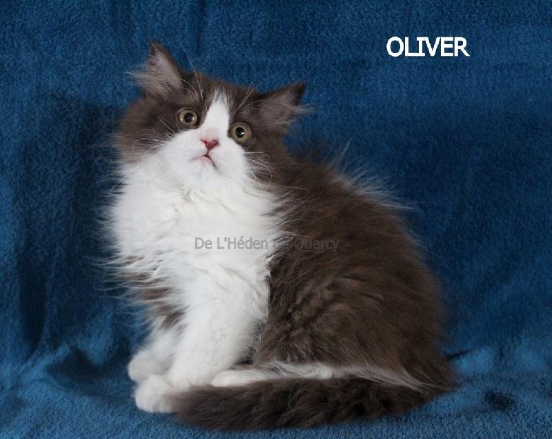 Oliver de L'Héden du Quercy -