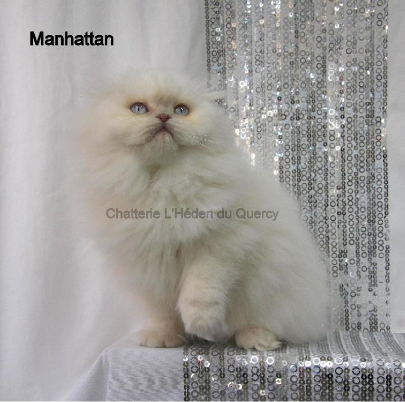 Manhattan de L'Héden du Quercy -