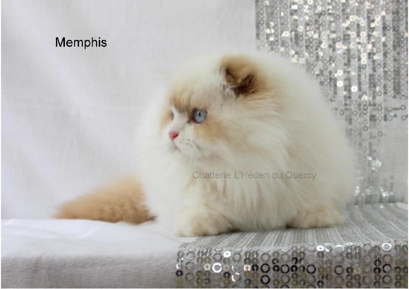 Memphis de L'Héden du Quercy