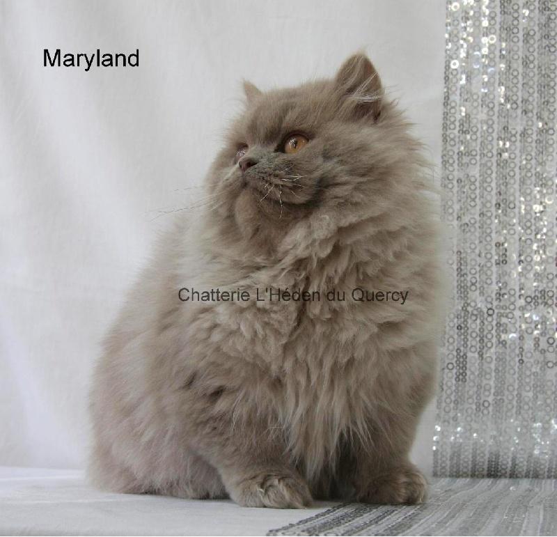 Maryland de L'Héden du Quercy