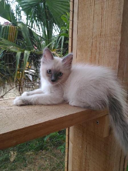 chat bouches du rhone