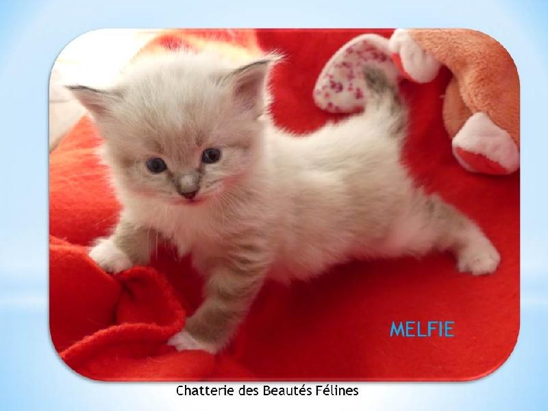 MELFIE