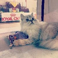 mcb'cats Marco Polo