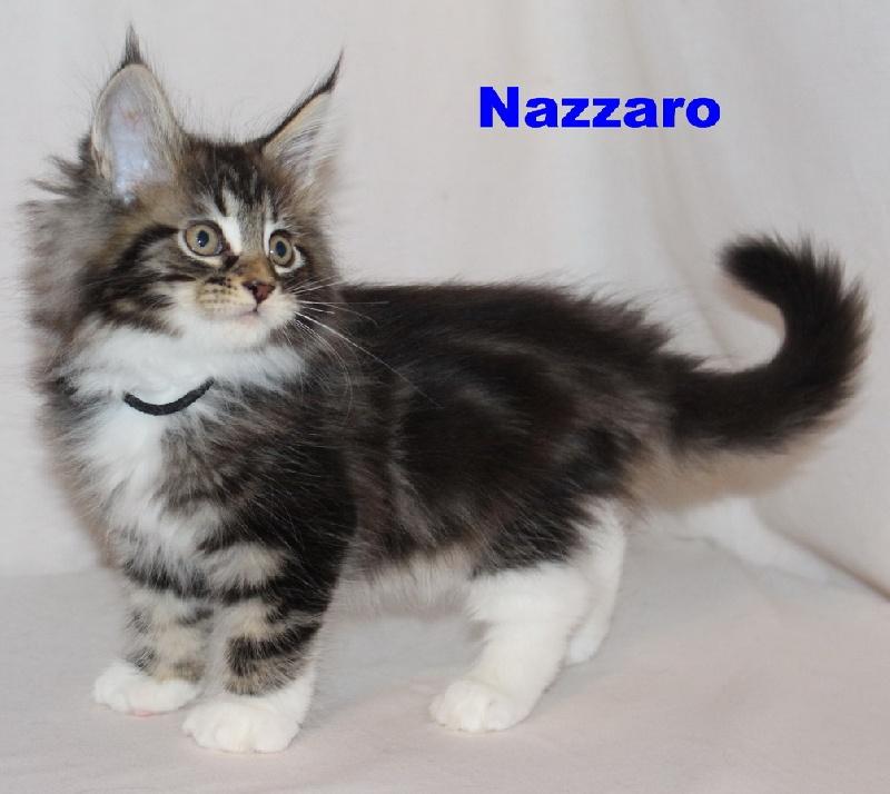 Nazzarro